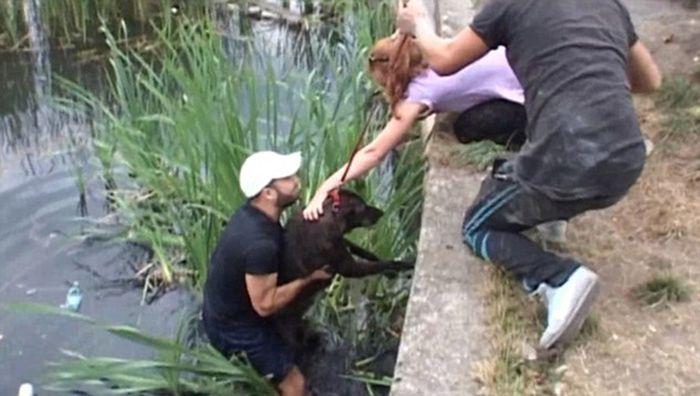 Спасение собак (7 фото)