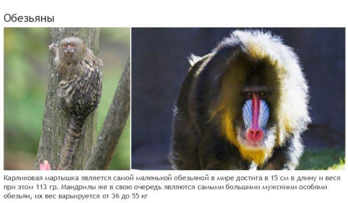 Такие разные животные одного вида (19 фото)