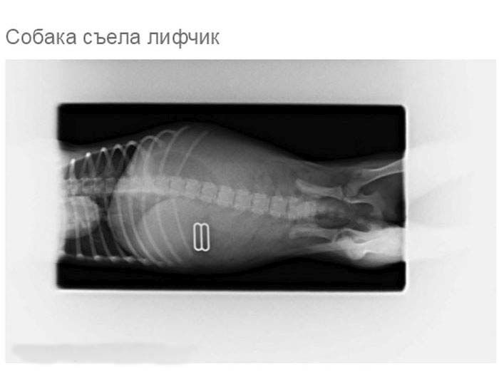 Что может оказаться в желудке собаки (19 фото)