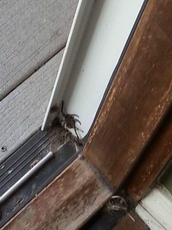 Сюрприз в дверном проеме (3 фото)