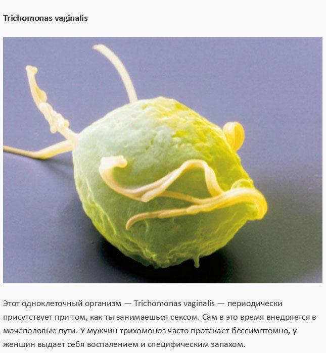 Микроорганизм