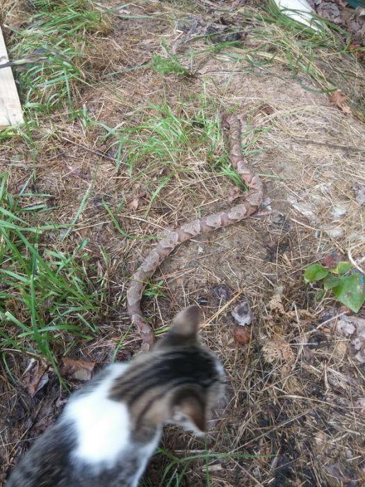Котейка-добытчик принес хозяину деликатес (4 фото)