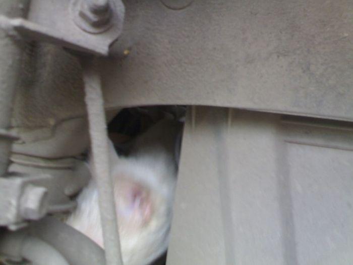 Неожиданная работа для сотрудников шиномонтажа (5 фото)