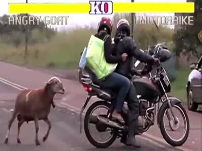 Злая коза против мотоциклистов в стиле Street Fighter (6.3 мб)