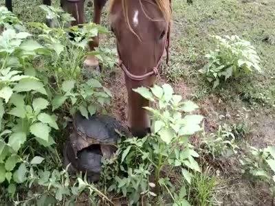 Лошадь испугалась черепахи (2.1 мб)
