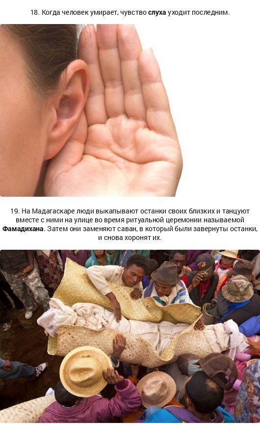 Шокирующие факты о смерти (11 фото)