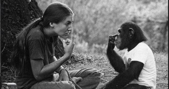 Насколько умными могут быть обезьяны (4 фото + текст)