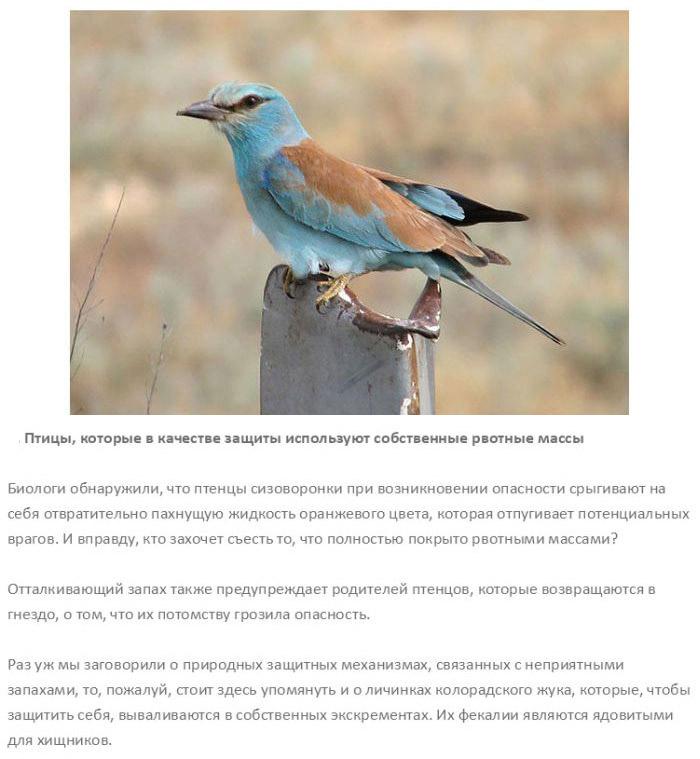 Природные механизмы защиты (10 фото)