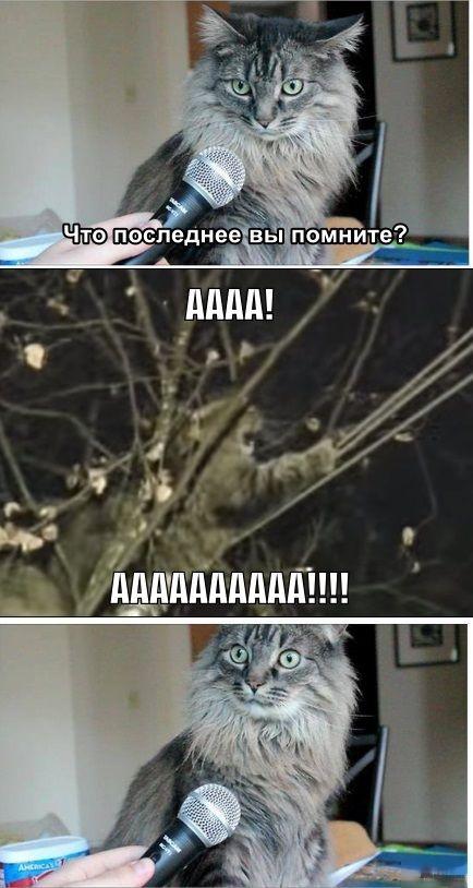 Фотожабы про спасение кота Барсика (27 фото + 2 коуба)