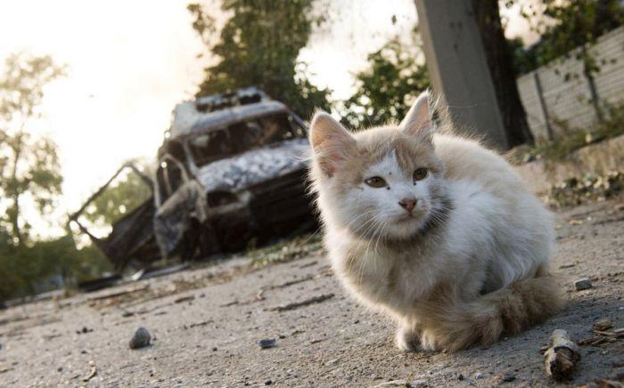 Военные действия в Донецке: как обстоят дела сейчас (30 фото)