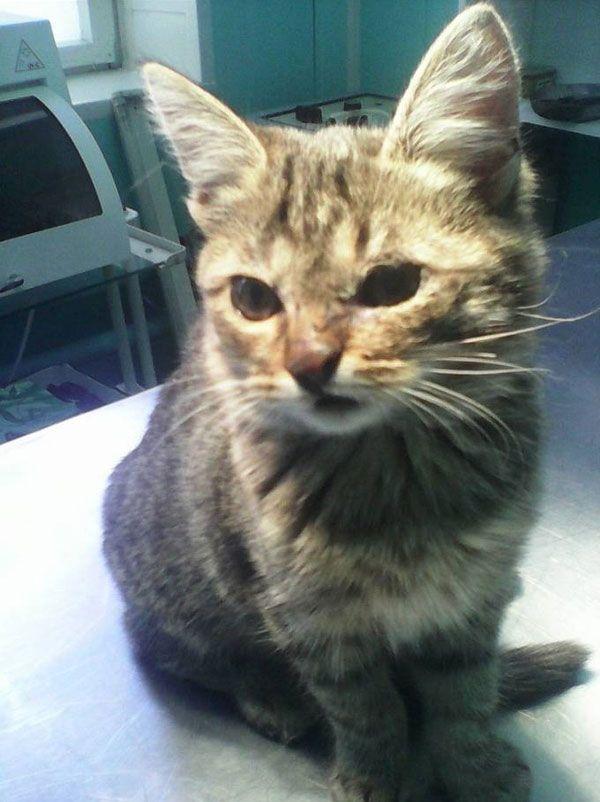 Дети спасли котенка, пострадавшего от живодеров (4 фото)