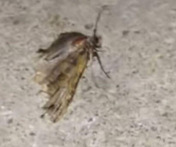 Сразу двух насекомых достали из уха американца (5 фото)