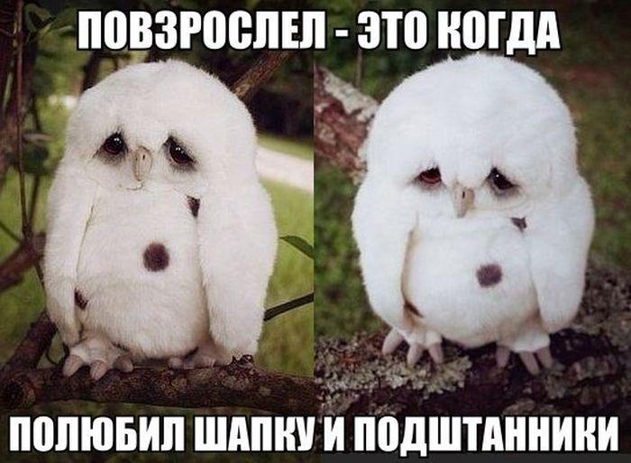 Прикольные картинки (119 фото)
