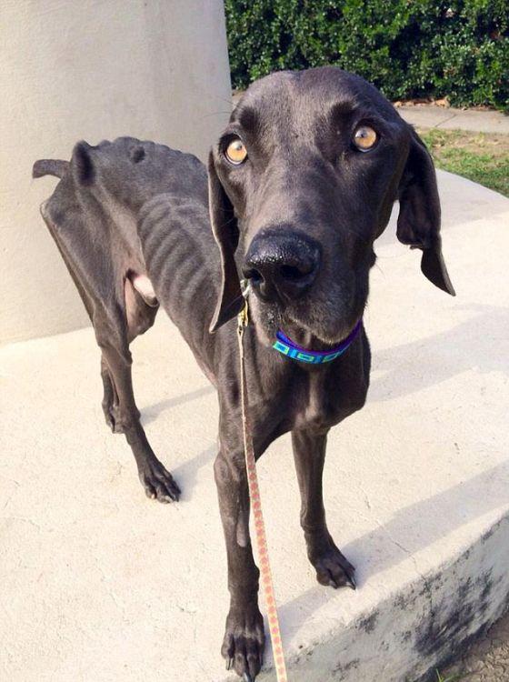История спасения одного пса (11 фото)