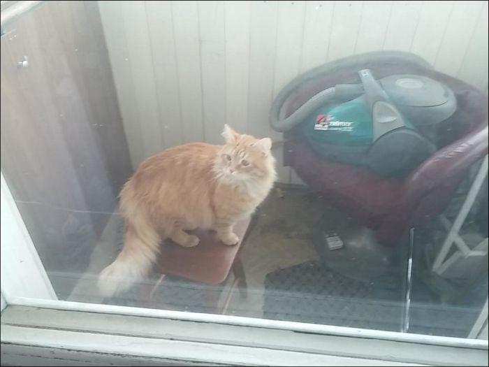 Кот закрыл своего хозяина на балконе (10 фото)