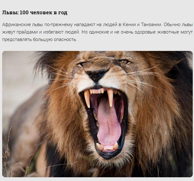 Животные-убийцы (17 фото)