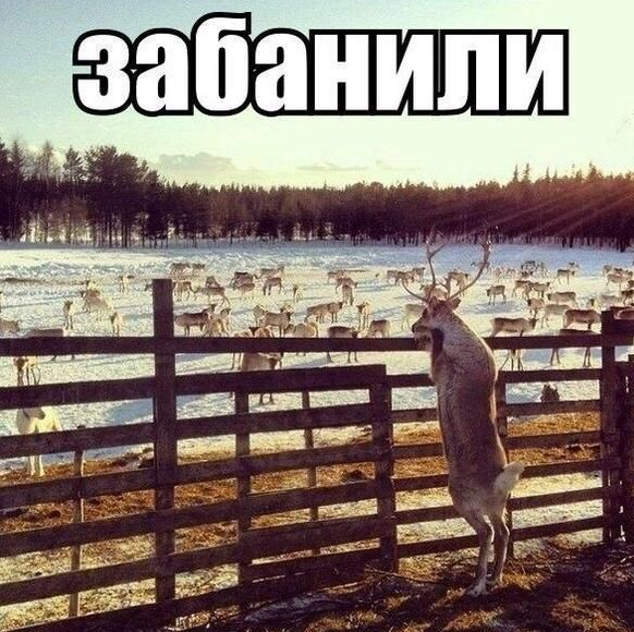podborka_38.jpg