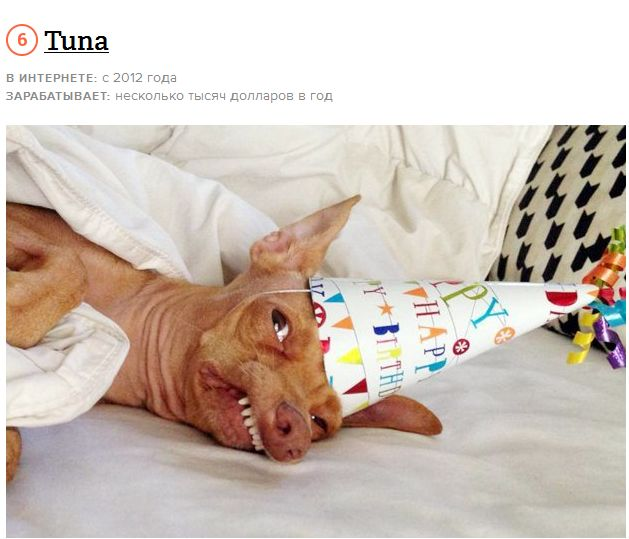 Домашние животные, и их интернет-заработок (19 фото + видео)