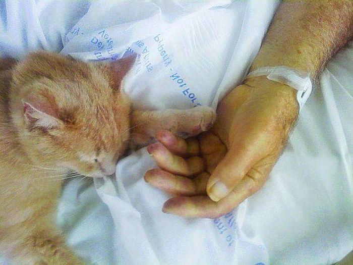 Кот-ангел по кличке Том (4 фото)