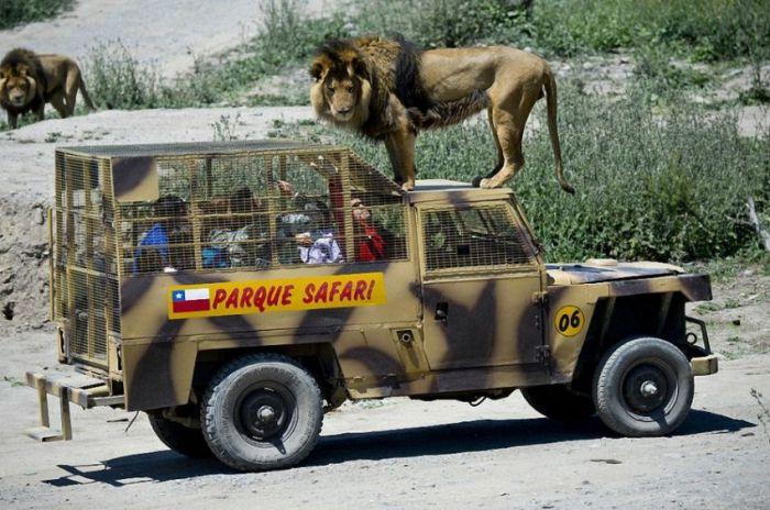 Зоопарк, в котором все наоборот (14 фото)
