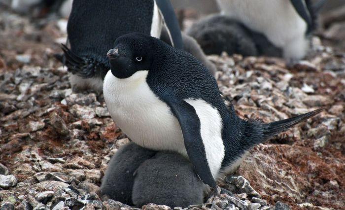 Круиз по побережью Антарктиды за полмиллиона долларов (10 фото)