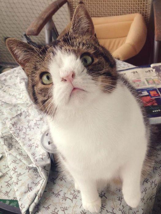 Кот с необычным носом (26 фото)