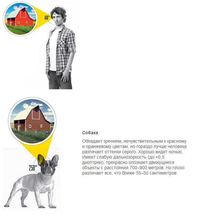Сравнение зрения: человек против животных (4 картинки)