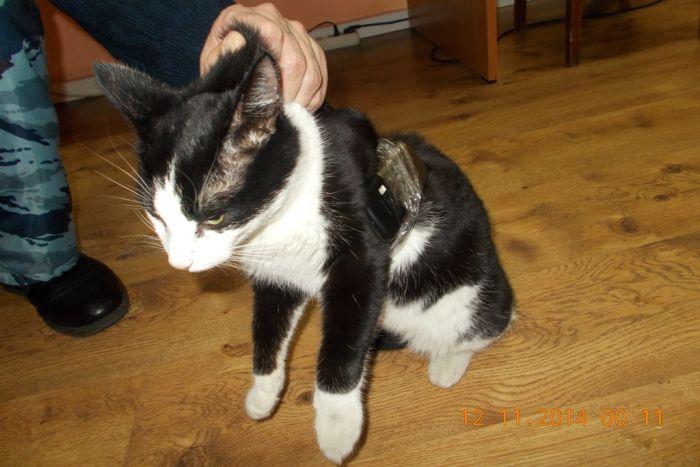 Кошка с контрабандным грузом была найдена в колонии (3 фото)
