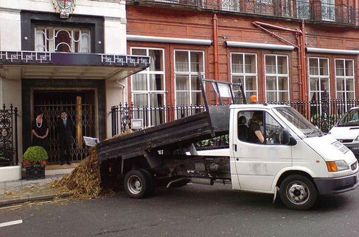 Бизнес на конском навозе (6 фото)