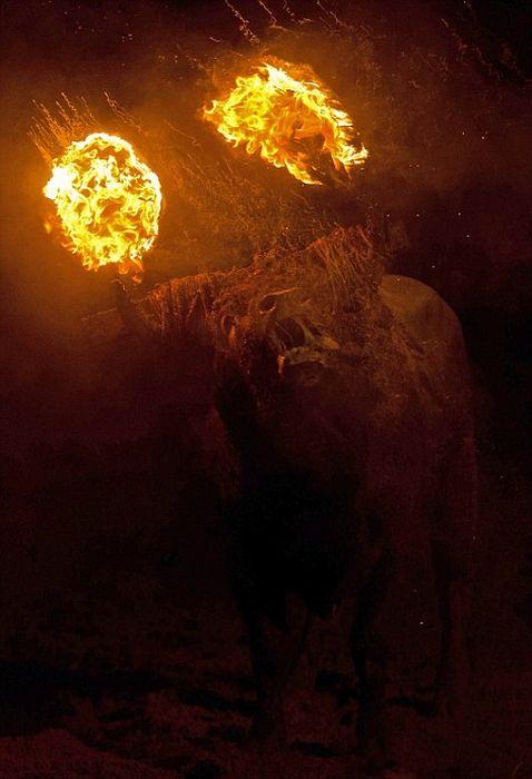 Варварский фестиваль Toro de Jubilo в Испании (22 фото)