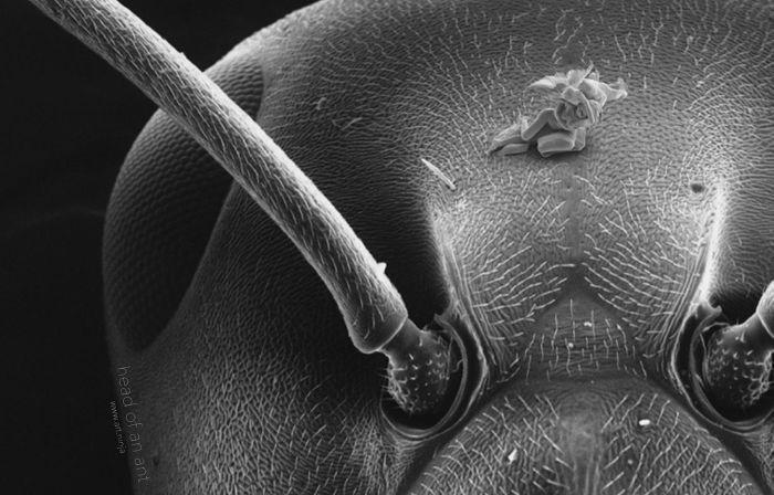 Микроскульптуры, которые не видны невооруженным глазом (9 фото)