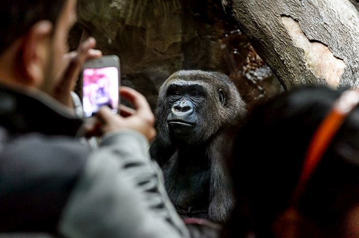 Фото из зоопарков всего мира (36 фото)