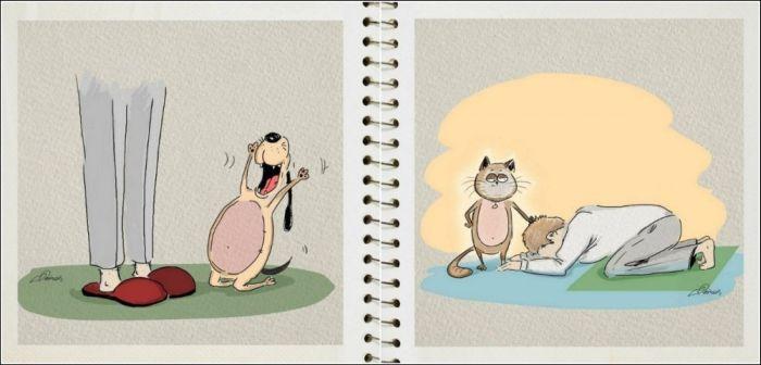 Отличия отношений человека с собакой и кошкой