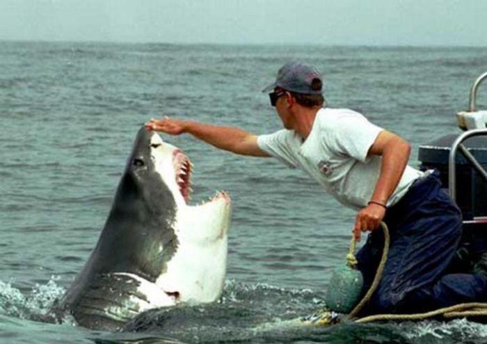 Акула с благими намерениями преследует рыбака из Австралии (4 фото)