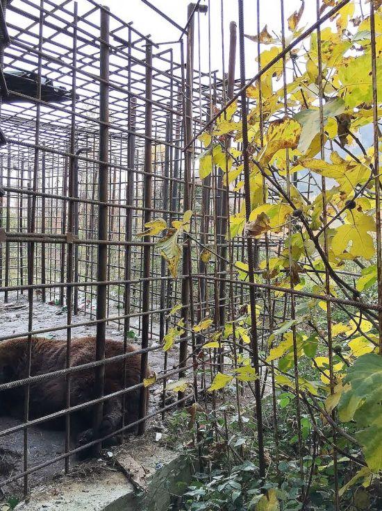 Ужасные условия жизни сочинских медведей, привлекающих посетителей в ресторан (5 фото)