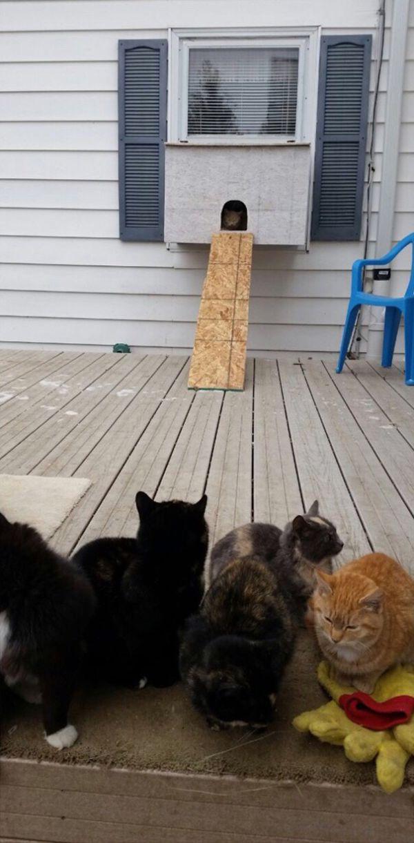 «Котвариум» для мерзнущих кошек (3 фото)