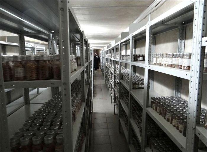 Якутское криохранилище семян растений (9 фото)