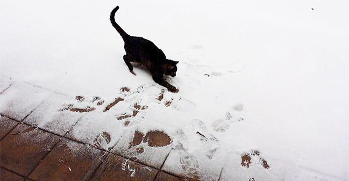 Первый снег в жизни животных (55 фото)
