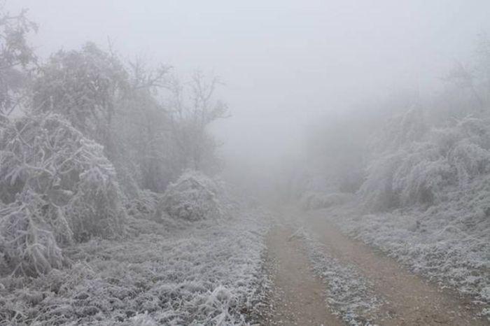 Редкий природный феномен в венгерском лесу (6 фото)