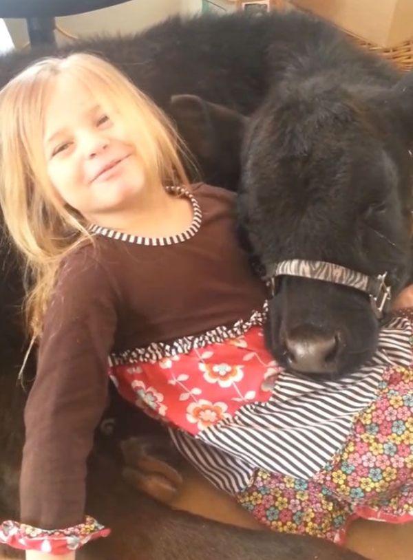 Девочка привела в дом теленка (10 фото)
