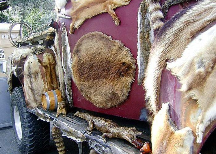 Раритетный пикап Ford обвесили трупами 50-ти животных (10 фото)