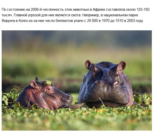 Дикие животные, вымирающие по вине человека (16 фото)