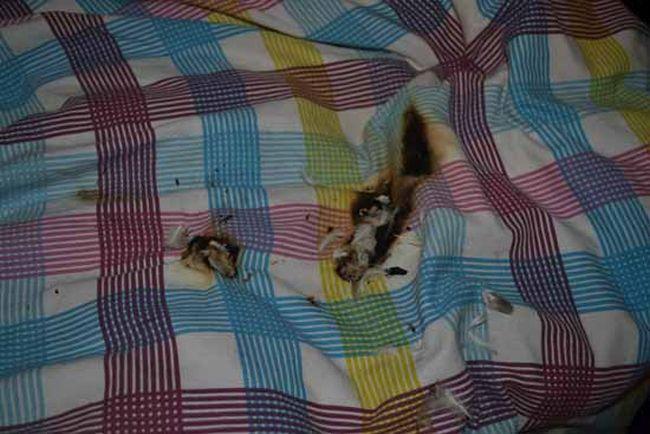 Samsung GALAXY Ace 2 взорвался рядом с кроватью своей хозяйки (13 фото)