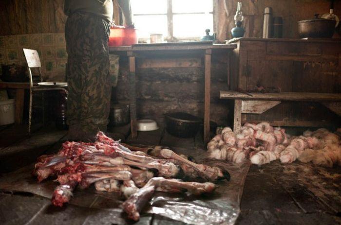 Непростая жизнь народа Эвенки (36 фото)
