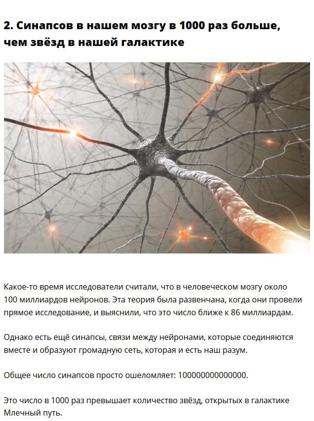 Удивительные факты о нашем организме (10 фото)
