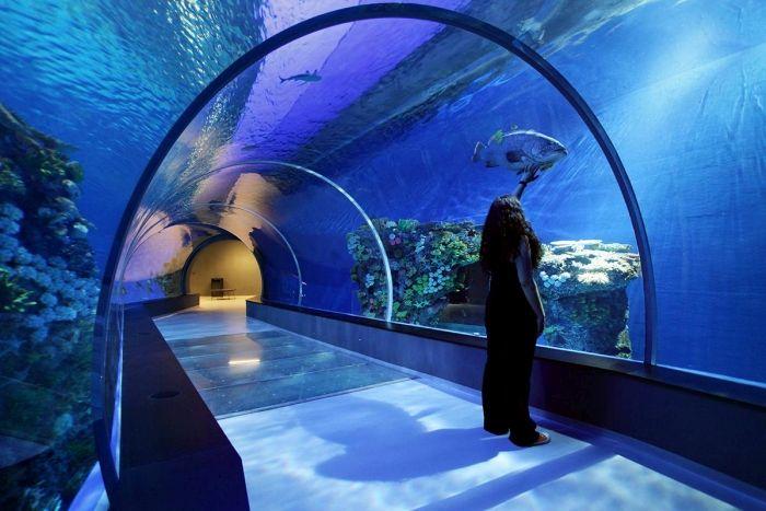 Уникальный океанариум «Голубая планета» в Дании (18 фото)