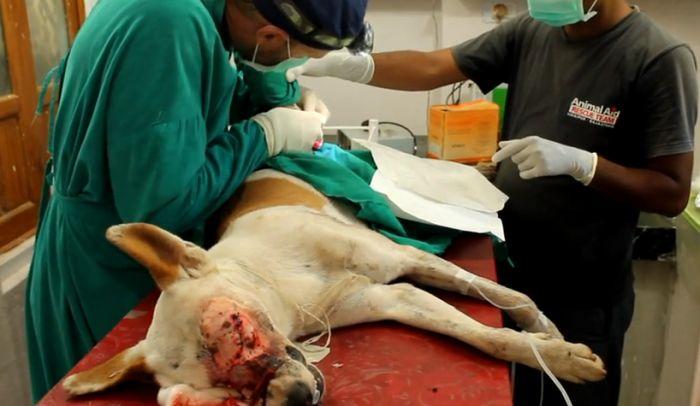 Спасение бездомной собаки в Индии (9 фото)