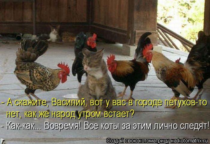 Смешные картинки куриц с надписями, гифы