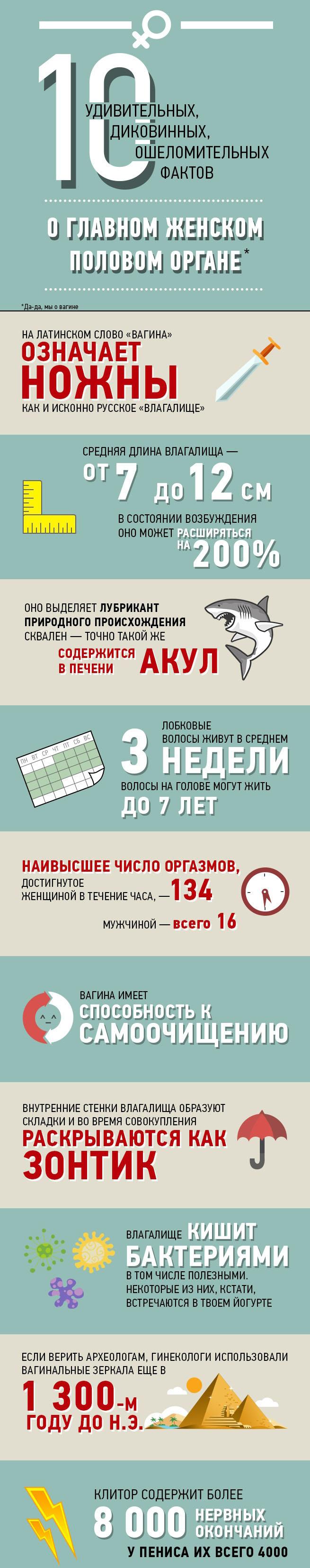 10 любопытных фактов о влагалище (картинка)