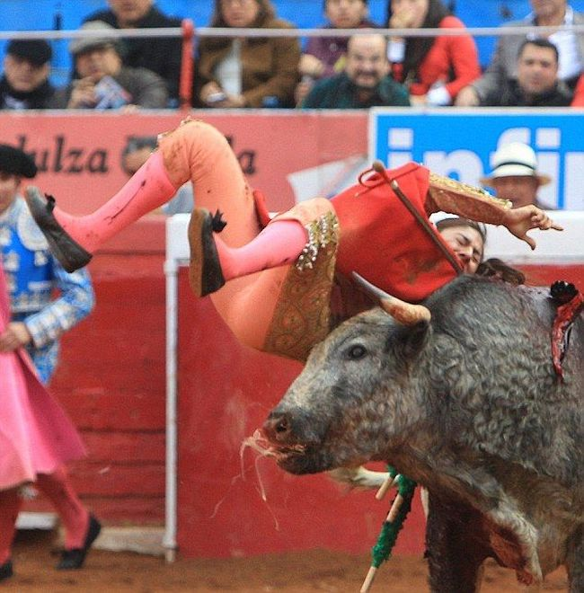 Female Bullfighter Gets Gored By Bull (3 pics)